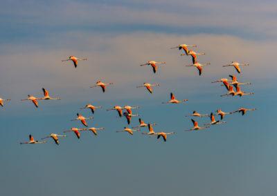 Flamingo Squadron
