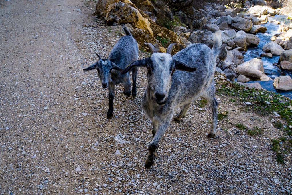 Hungry Cabras Sierra de Cazorla