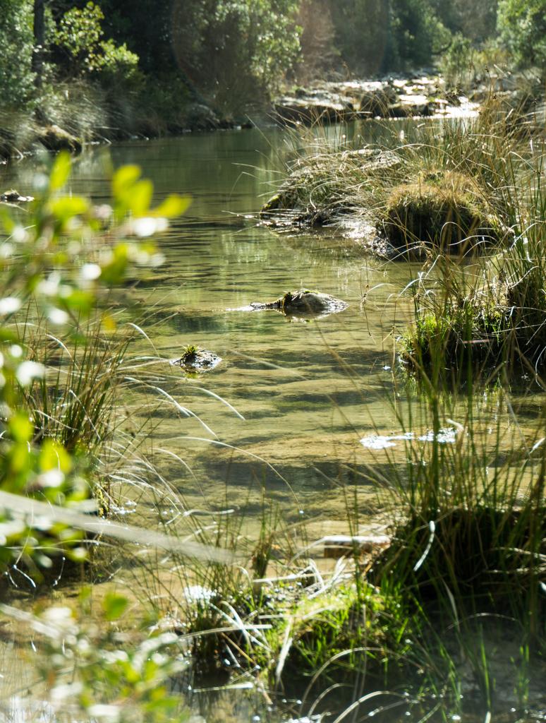 River Glass Sierra de Cazorla