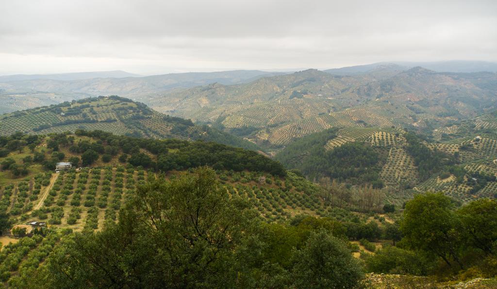 Olive Groves Sierra de Cazorla